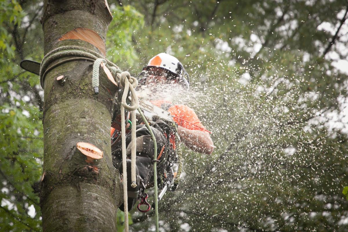 abattage d'arbre 91 DC paysage 91